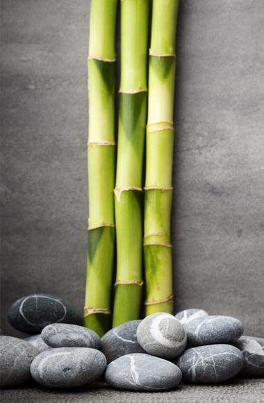bambu 380x580